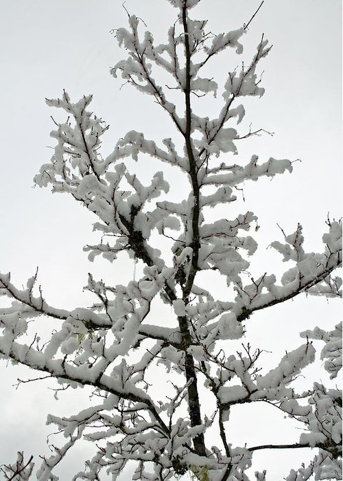 Bare Branches Greeting Card featuring the photograph Bare Branches With Snow by Tikvah's Hope