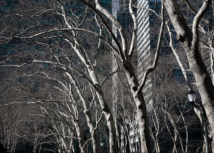 Bare Trees Greeting Card featuring the photograph Bare by Joanna Madloch