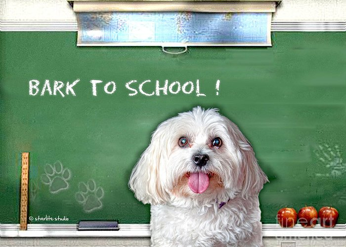 Starlitestudio Greeting Card featuring the photograph Bark To School by Starlite Studio