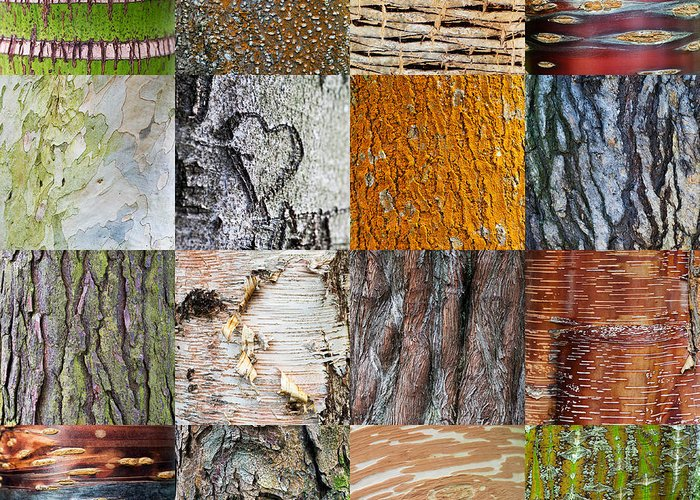 Quercus Greeting Cards