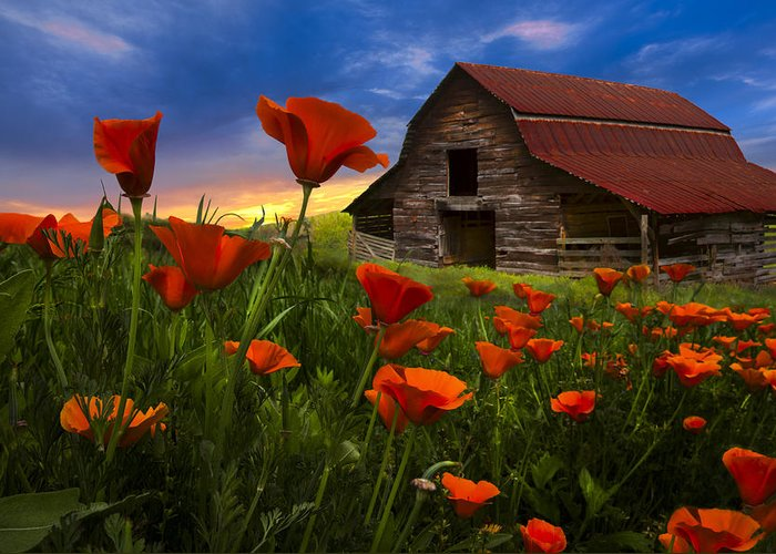 American Greeting Card featuring the photograph Barn In Poppies by Debra and Dave Vanderlaan
