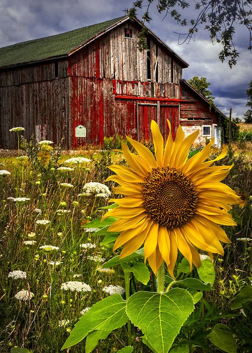 Old Barns Greeting Cards