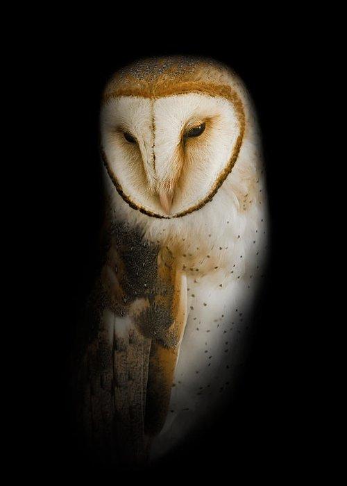 Barnyard Owl Greeting Cards