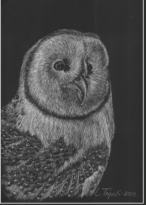 Wildlife Greeting Card featuring the drawing Barn Owl by Lawrence Tripoli