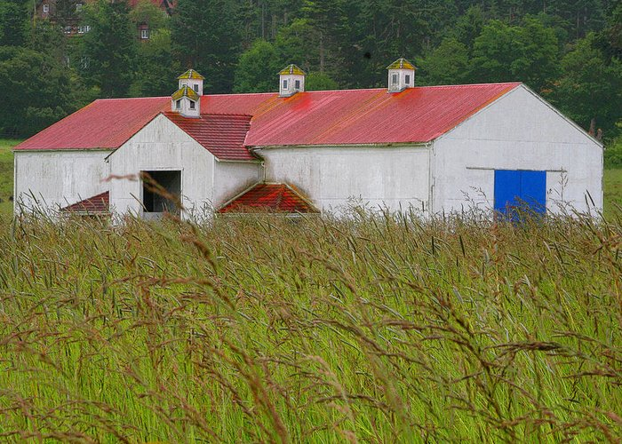 San Juan Island Greeting Card featuring the photograph Barn With Blue Door by Art Block Collections