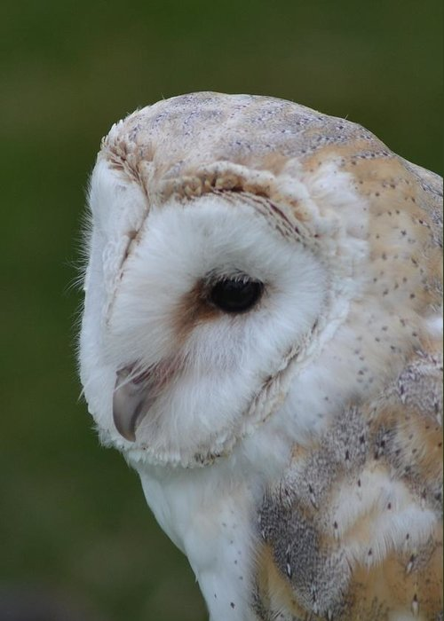 Barn Owl Greeting Card featuring the photograph Barny by Harvey Scothon