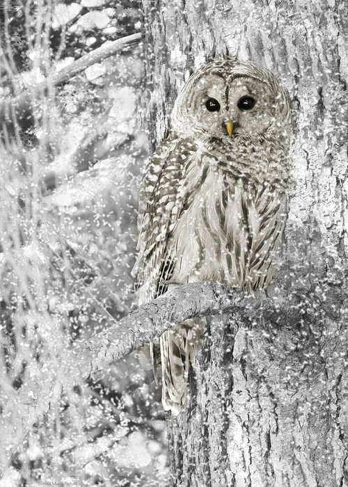 Owl Greeting Card featuring the photograph Barred Owl Snowy Day In The Forest by Jennie Marie Schell