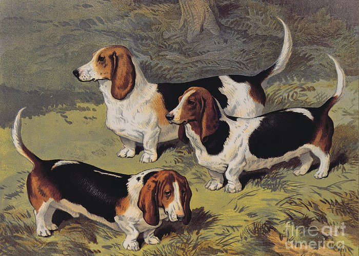 Dogs Greeting Card featuring the painting Basset Hounds by English School