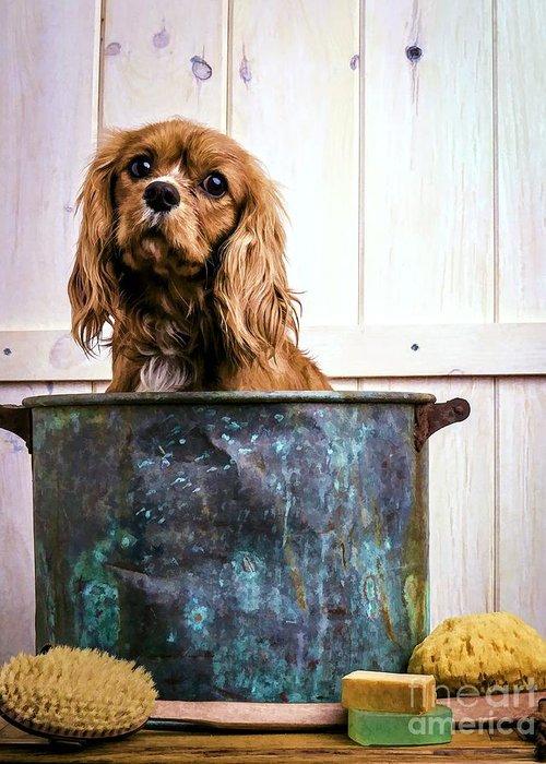 Max Dog King Charles Spaniel Pet Bath Time Sad Pet Cute Puppy Greeting Card featuring the photograph Bath Time - King Charles Spaniel by Edward Fielding