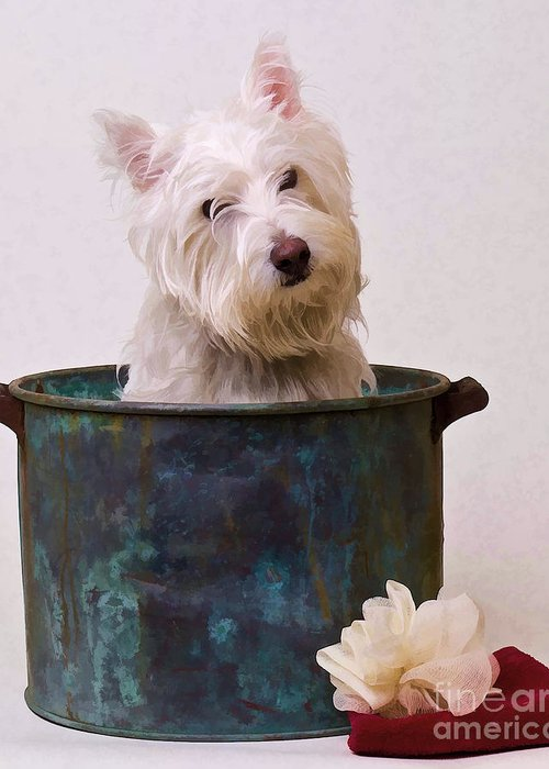 Dog Greeting Card featuring the photograph Bath Time Westie by Edward Fielding