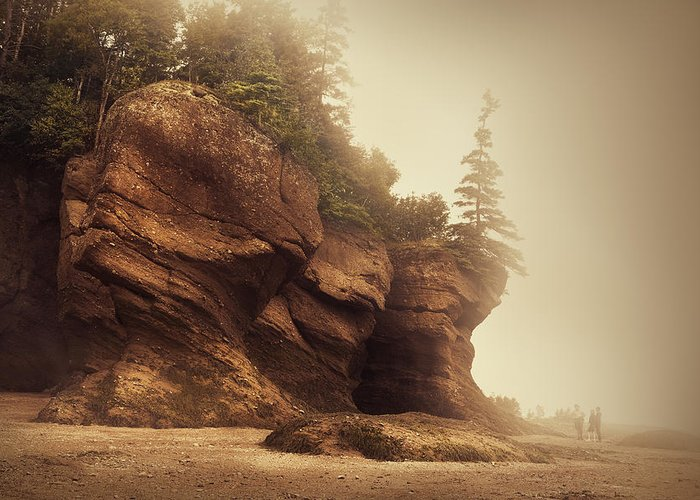 Bay Of Fundy Greeting Cards