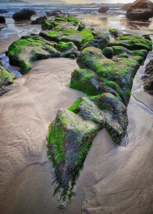 Sand Greeting Card featuring the photograph Beach At Cape Kiwanda by Jim Young