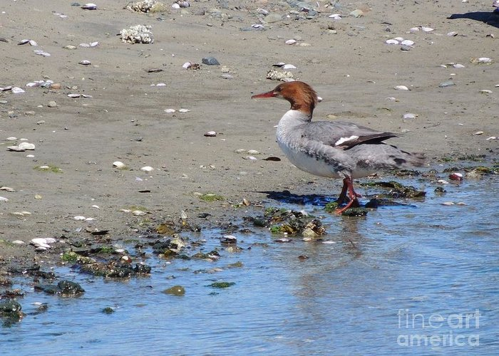 Water Bird Greeting Card featuring the photograph Beach Bound by Nancy Taylor Major