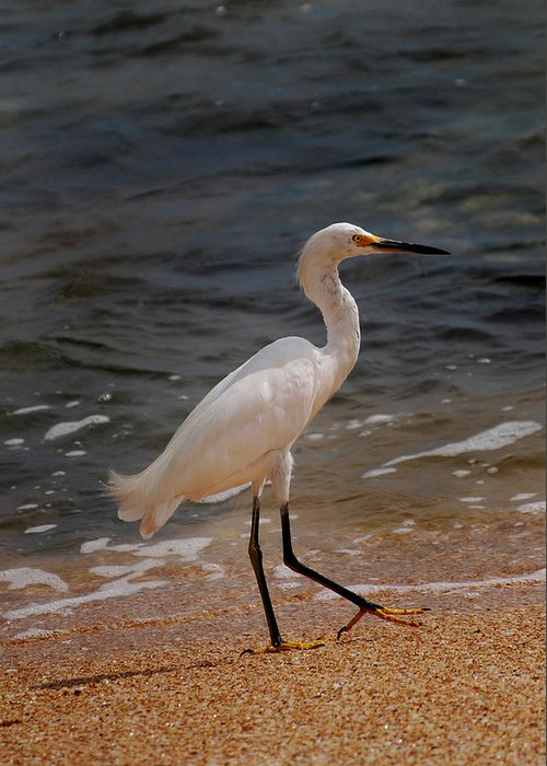 Egret Greeting Card featuring the photograph Beach Bum by Skip Willits