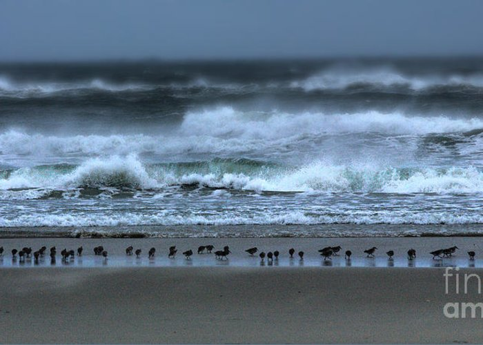 North Carolina Greeting Card featuring the photograph Beach Feast - Outer Banks Ocracoke by Dan Carmichael