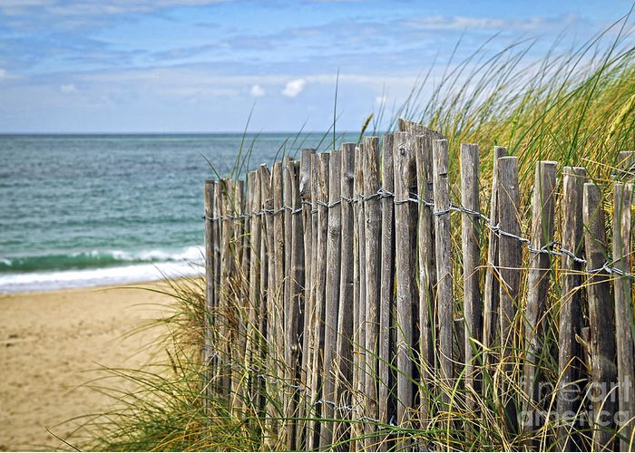 Ocean Greeting Card featuring the photograph Beach Fence by Elena Elisseeva