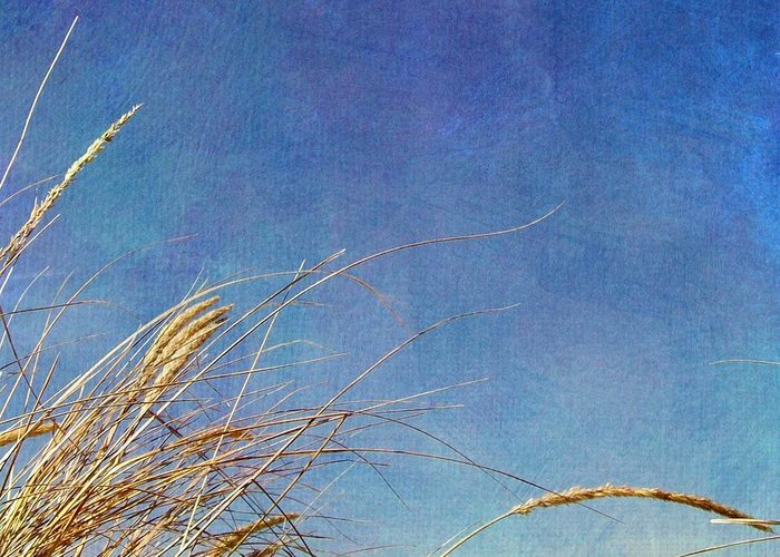 Beach Greeting Card featuring the photograph Beach Grass In The Wind by Michelle Calkins
