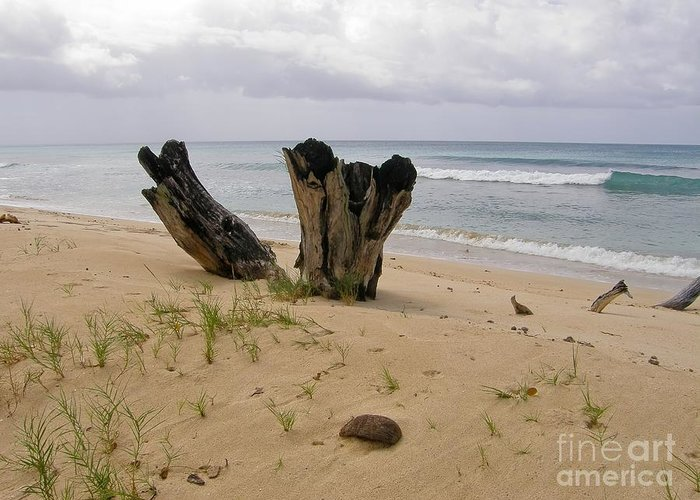 Beach Greeting Card featuring the photograph Beach Scenery by Sophie Vigneault