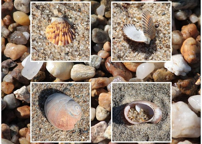 Shells Greeting Card featuring the photograph Beach Shells And Rocks Collage by Carol Groenen