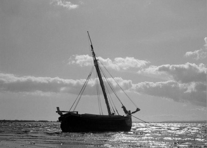 Montijo Greeting Card featuring the photograph Beached by Luis Esteves