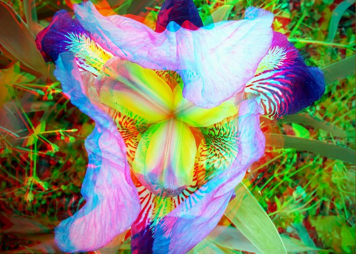 3d Greeting Card featuring the photograph Bearded Iris Cultivar - Use Red-cyan 3d Glasses by Brian Wallace