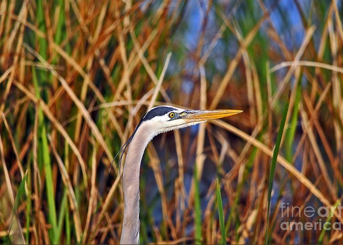 Heron Greeting Card featuring the photograph Beautiful Blue by Al Powell Photography USA