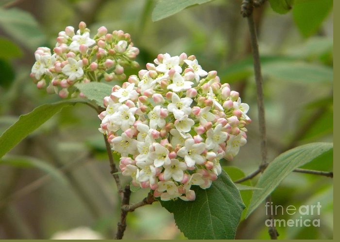 Jaclyn Greeting Card featuring the photograph Beautiful Bunch by Jaclyn Hughes Fine Art
