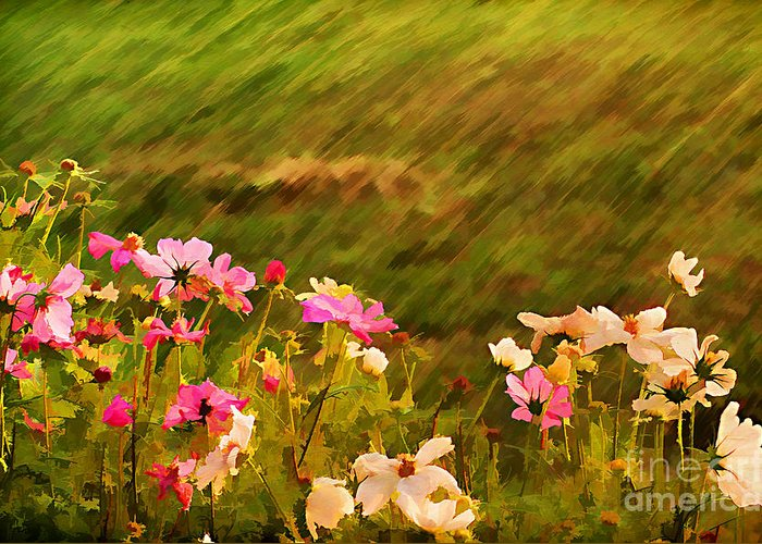 Background Greeting Card featuring the photograph Beautiful Cosmos by Darren Fisher