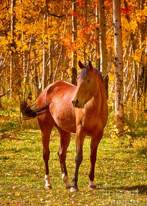 Horse Greeting Card featuring the photograph Beautiful Horse In The Autumn Aspen Colors by James BO Insogna