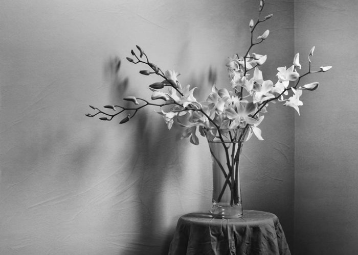 Orchid Greeting Card featuring the photograph Beautiful Melancholy by Amy Weiss