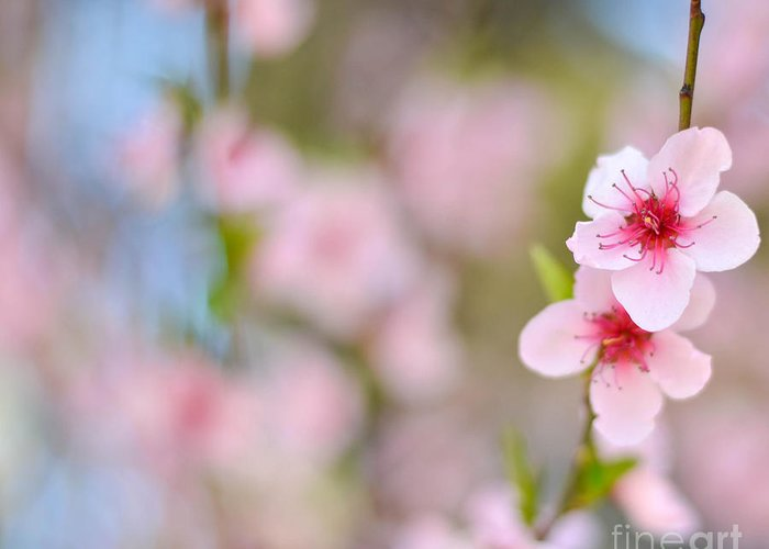 Tree Greeting Card featuring the photograph Beautiful Peach Flower Against Blured Background by Aleksandar Mijatovic