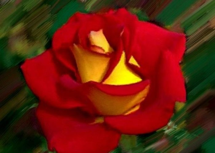 Rose Greeting Card featuring the painting Beautiful Red Rose by Bruce Nutting