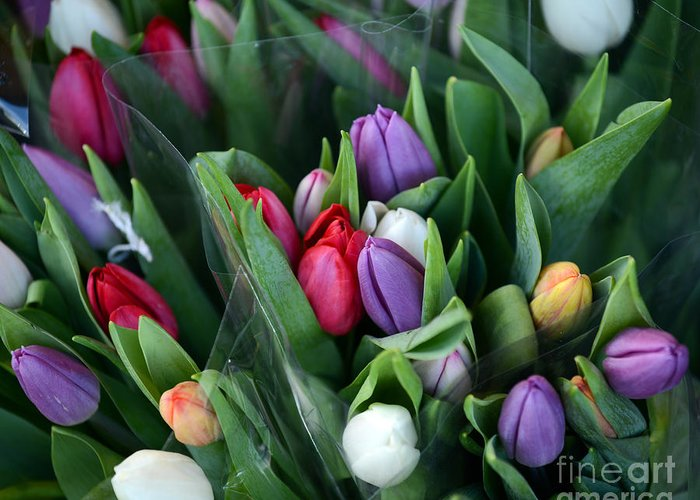 Tulips Greeting Card featuring the photograph Beautiful Tulips Bouquet by Aleksandar Mijatovic