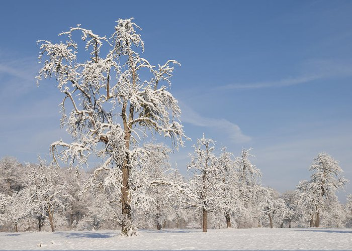 Winter Greeting Card featuring the photograph Beautiful Winter Day With Snow Covered Trees And Blue Sky by Matthias Hauser