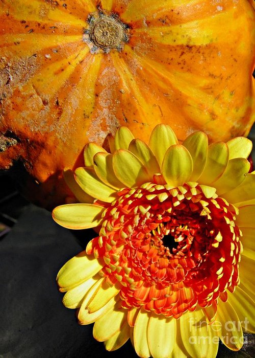 Beauty And The Squash 2 Greeting Card featuring the photograph Beauty And The Squash 2 by Sarah Loft