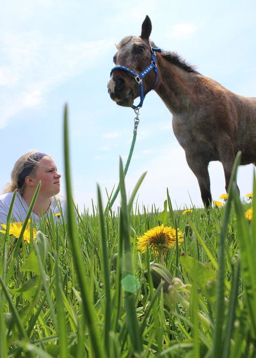 Horse Greeting Card featuring the photograph Beauty by Tiffany Erdman