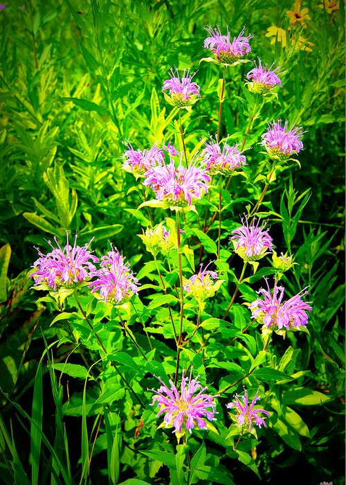 Greeting Card featuring the photograph Bee Balm Of The Butterfly Gardens Of Wisconsin by Carol Toepke