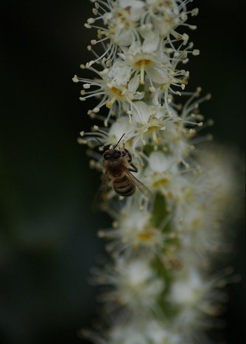 Bee Greeting Card featuring the photograph Bee Love by Lucas Greulich