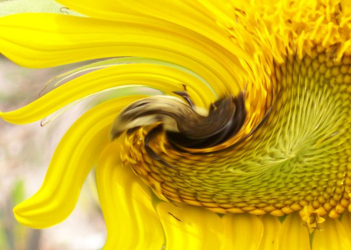 Bumble Bee On A Beautiful Blooming Greeting Card featuring the photograph Bee Twirl by Belinda Lee