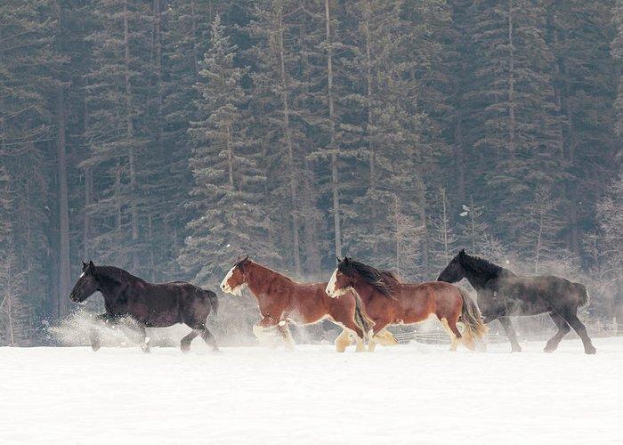 Equus Ferus Caballus Greeting Cards