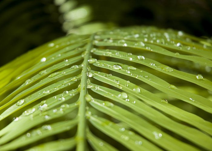 Leaves Greeting Card featuring the photograph Bending Ferns by Carolyn Marshall