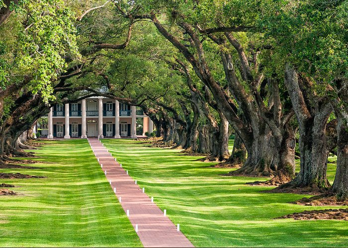 Oak Alley Plantation Greeting Card featuring the photograph Beneath Live Oaks by Steve Harrington