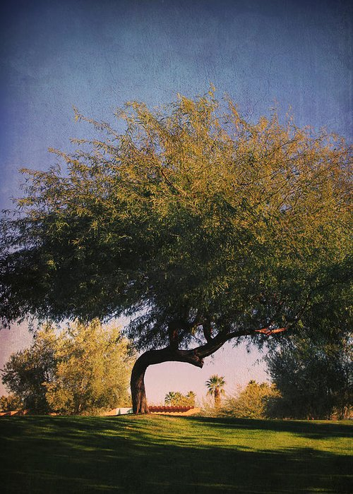 La Quinta Civic Center Park Greeting Card featuring the photograph Bent But Not Broken by Laurie Search