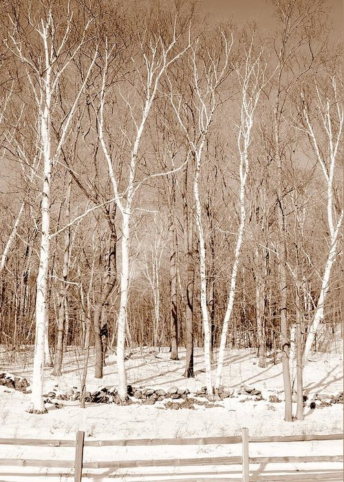 Landscape Greeting Card featuring the photograph Berkshire White Birches by Glenn Urquhart