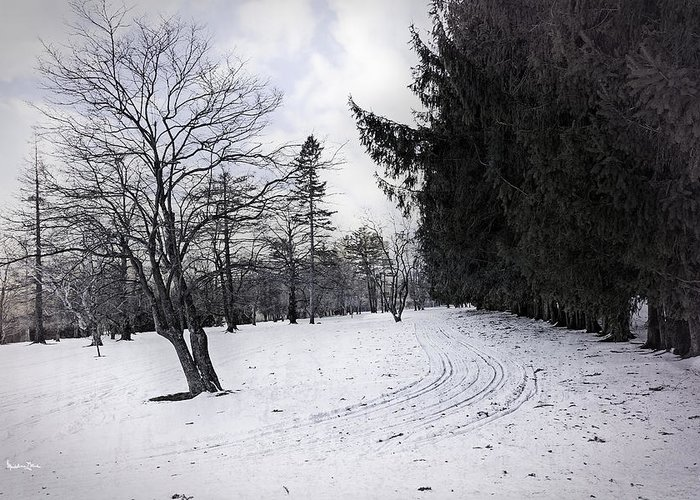 Berkshires Greeting Card featuring the photograph Berkshires Winter 9 - Massachusetts by Madeline Ellis