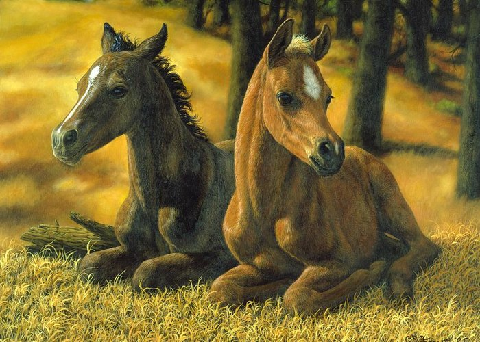 Baby Horse Greeting Cards