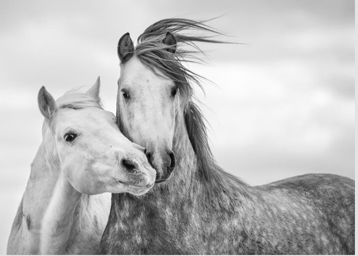 Wild Horse Greeting Cards