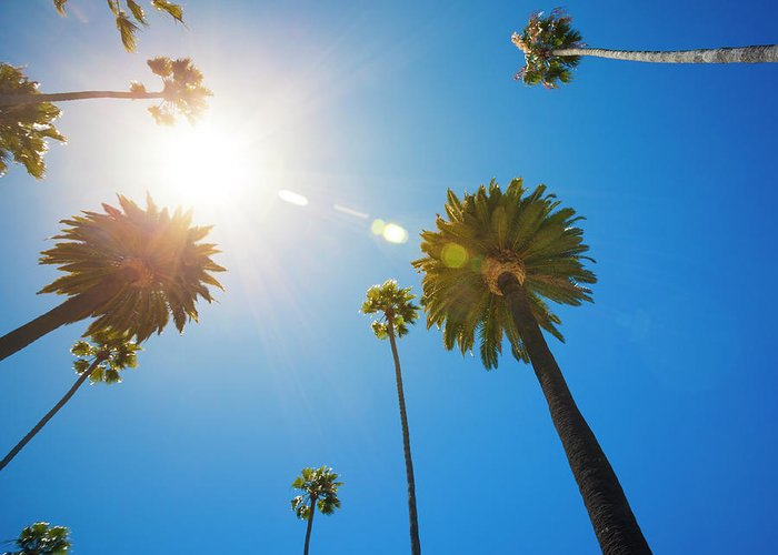 Beverly Hills Greeting Card featuring the photograph Beverly Hills Palm Trees by Lpettet