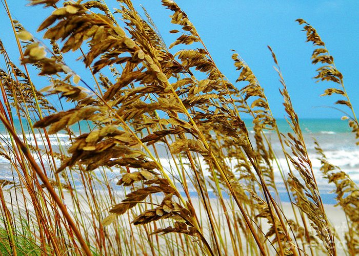 Greeting Card featuring the photograph Beyond The Sea Oats Lies Eternity by Lorraine Heath