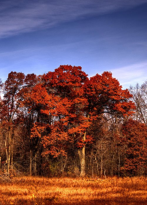 Fall Greeting Card featuring the photograph Big Red by Thomas Young